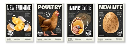 Poultry farming chicken life cycle raising birds from eggs embryo development 4 realistic posters set vector illustration