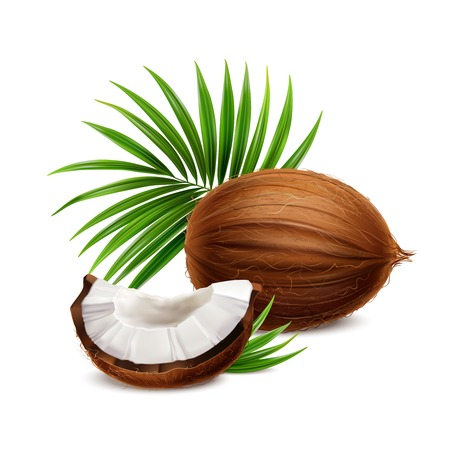 Coconut fresh whole and segment with white flesh closeup realistic composition with palm frond leaves vector illustration Ilustração