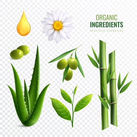 Realistic transparent organic cosmetics ingredients icon set with plants oil aloe olives vector illustration Ilustrace