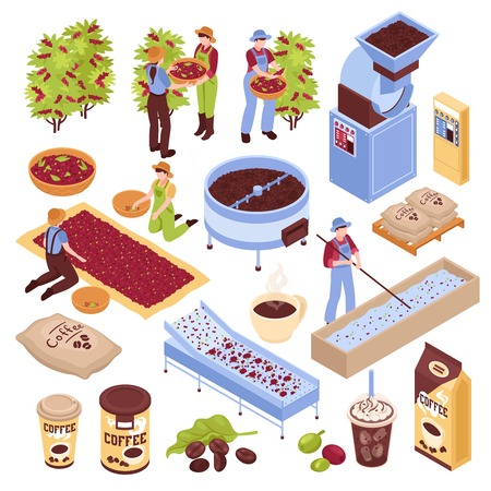 Production de café isométrique sertie d'images isolées représentant différentes étapes de la production de grains de café avec illustration vectorielle de personnes