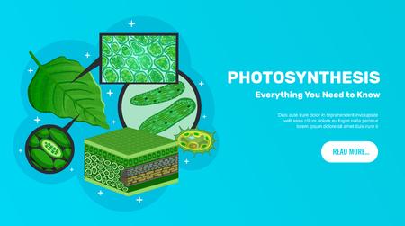Photosynthese-Basisinformations-Website horizontales Banner-Design mit grünen Blättern Zellen Chloroplasten Chlorophyll-Struktur-Hintergrund-Vektor-Illustration