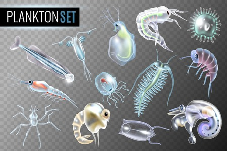 Plankton transparent set of daphnia amphipod  krill copepod phytoplankton underwater inhabitants isolated vector illustration Illustration