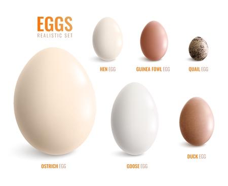 Farbige realistische Eiersymbole mit Eiern von Straußenhenne Gans Ente Perlhuhn Wachtel Vektor-Illustration