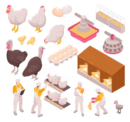Isometric chicken production poultry farm set with isolated images of human workers and farm animals eggs vector illustration Illustration