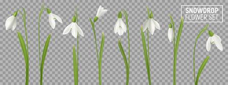 Fiore di bucaneve realistico impostato su sfondo trasparente con immagini realistiche isolate di fiori naturali con illustrazione vettoriale di steli