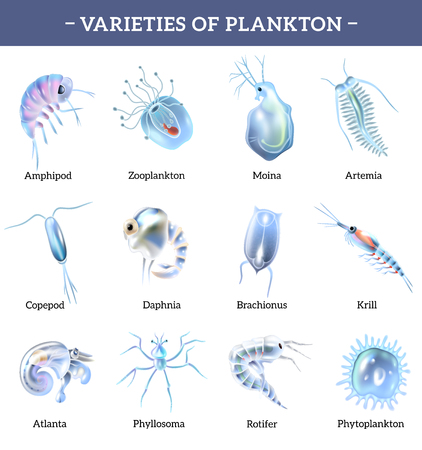 Varieties of plankton isolated icons set with text explanation cartoon vector illustration Illustration