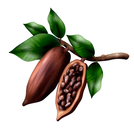 Cocoa tree branch realistic composition with image of cacao fruits on limb with leaves and beans vector illustration