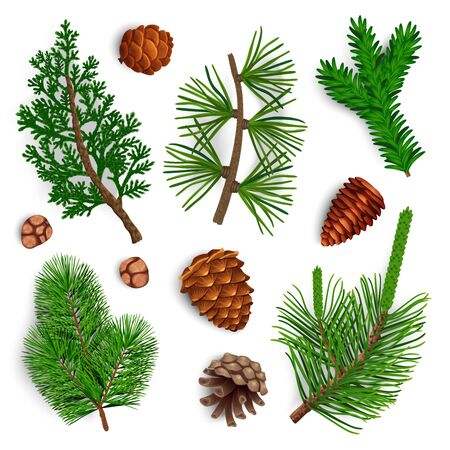 Set with isolated images of pine tree cone fir needle foliage with shadows on blank background vector illustration Illustration