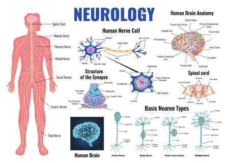 Neurologia i anatomia ludzkiego mózgu zestaw ilustracji wektorowych płaski na białym tle Ilustracje wektorowe