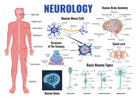 Neurology and human brain anatomy set flat isolated vector illustration