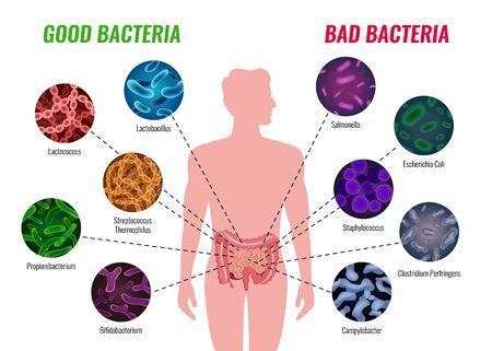 Cartel de bacterias buenas y malas con símbolos de salud y tratamiento ilustración vectorial plana
