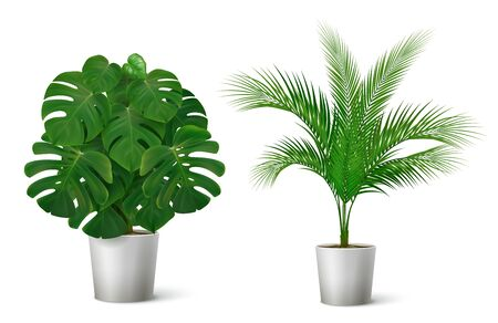Realistic composition with two potted tropical plants with big leaves isolated on white background vector illustration