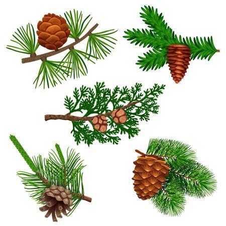 Conifer dennenboom kegel set met kleurrijke geïsoleerde afbeeldingen van naaldhout twijgen met spar naald gebladerte vectorillustratie
