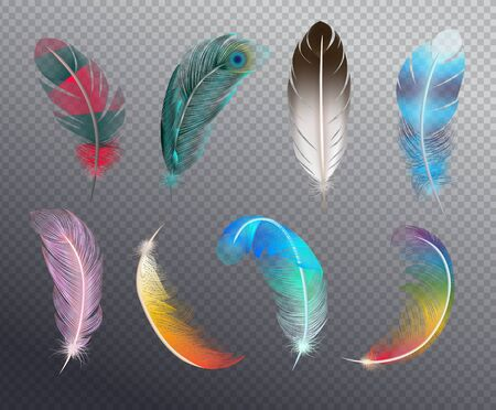 Colorful realistic set of bird feathers painted in different patterns or rainbow colors on transparent background vector illustration