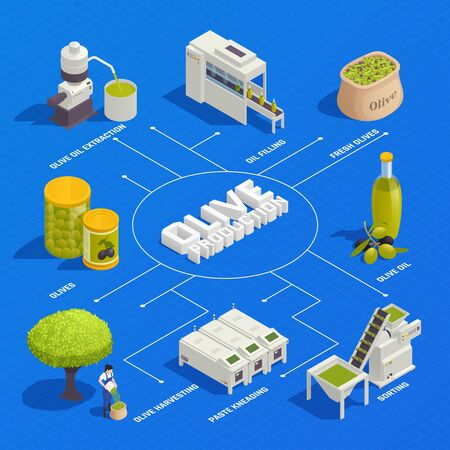 Olive production isometric flowchart with fruit harvesting sorting kneading oil extraction filling and packaging line vector illustration