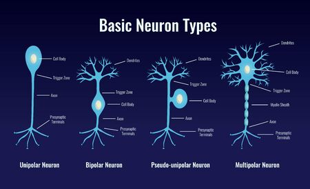 Neurology neuron types composition with flat glowing images of basic neuronal cells with editable text captions vector illustration