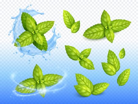 Mint realistic design set of ripe green leaves on sparkling water drops background with fresh blossoms vector illustration