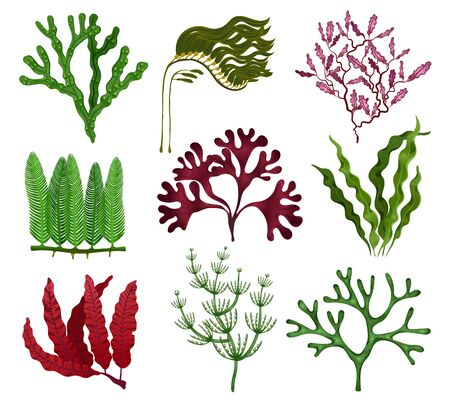Seaweeds colorful flat set with 9 red brown green algae species against white background isolated vector illustration