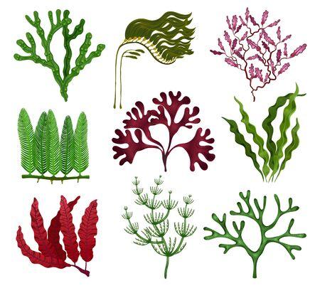 Wodorosty morskie kolorowy płaski zestaw z 9 gatunkami czerwono-brązowo-zielonymi algami na białym tle ilustracji wektorowych na białym tle