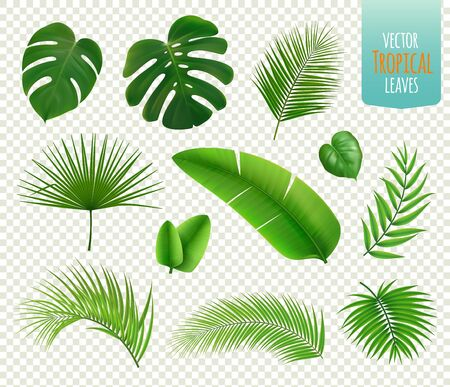 Realistic icons set with leaves of various tropical trees and plants isolated on transparent background vector illustration
