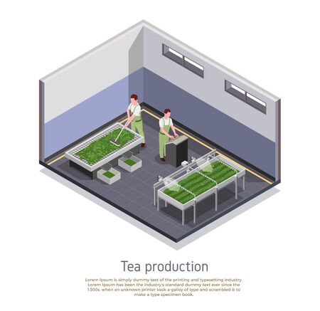 Modern tea production facility isometric composition with grading and oxidizing harvested leaves process descriptive text vector illustration Illustration