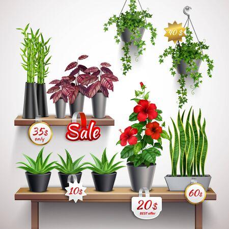 House plants shop realistic vector illustration
