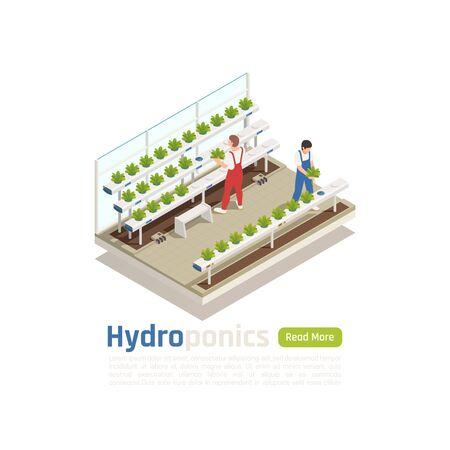 Composición isométrica de invernadero hidropónico moderno con 2 trabajadores que controlan las plantas que crecen sin la ilustración de vector de sistema de riego del suelo