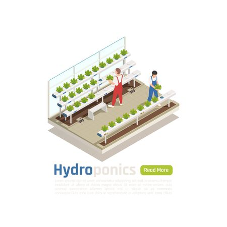 Modern hydroponic greenhouse isometric composition with 2 workers checking plants  growing without soil irrigation system vector illustration Illustration