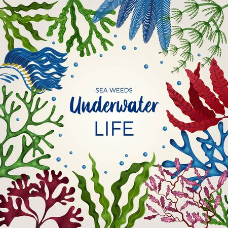 Underwater life colorful decorative square frame cover page with brown green red algae seaweeds flat vector illustration