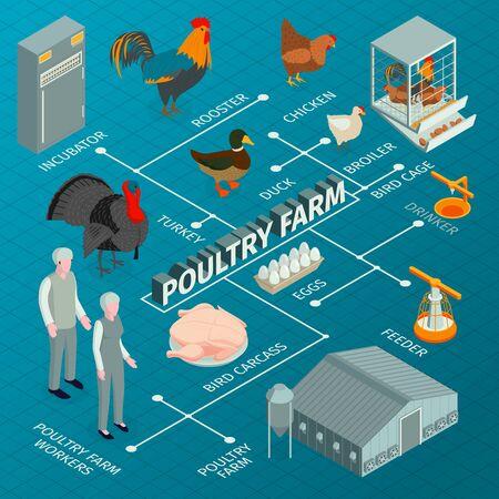 Isometrische Geflügelfarm-Flussdiagrammzusammensetzung mit Bildern von Nutztieren mit Arbeitercharakter-Feedern und Inkubatoren-Vektorillustration Vektorgrafik