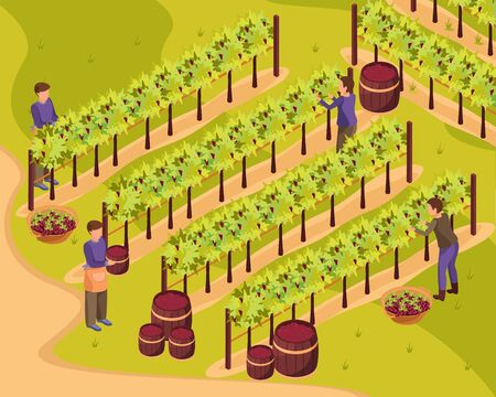 Wine production background with harvest and wineyard symbols isometric vector illustration 일러스트