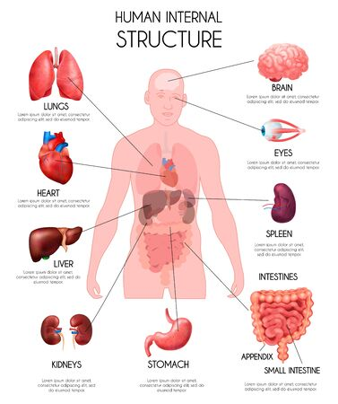 Infografía de órganos internos humanos realistas fondo blanco con pulmones oído hígado riñones cerebro ojos bazo intestinos descripciones ilustración vectorial