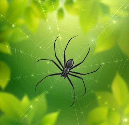 Spider on web realistic composition with blurry nature background with leaves and spiderweb with hanging insect vector illustration Illustration