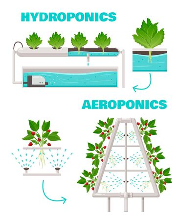 Hydroponics and aeroponics concept with watering and fast growth symbols cartoon vector illustration