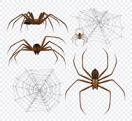 Spiders realistic set on transparent background with detailed images of spidernet and black spiders different angles vector illustration