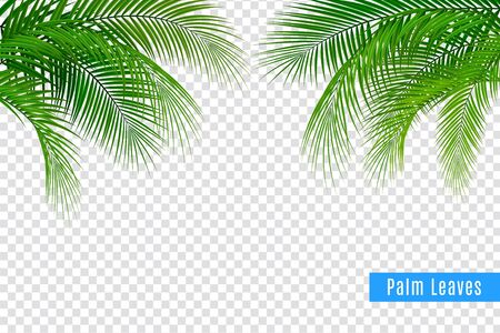 Tropical leaves palm branch realistic frame composition with transparent background and clusters of leaves with text vector illustration