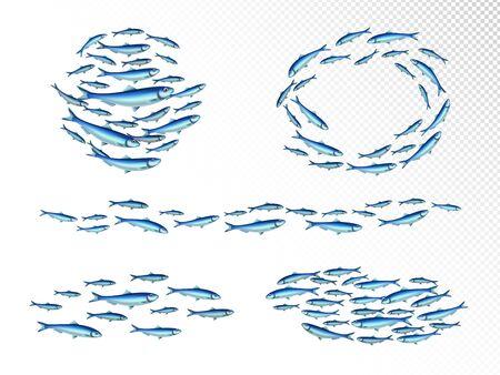Colonies d'écoles de poissons ensemble réaliste avec forme de coin en mouvement rapide alimentation des bancs circulair fond transparent illustration vectorielle