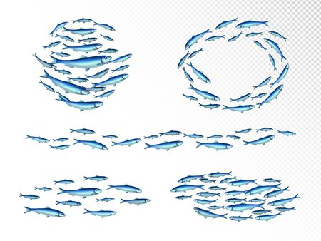 Fish school colonies realistic set with fast moving wedge shape feeding shoals circulair transparent background vector illustration