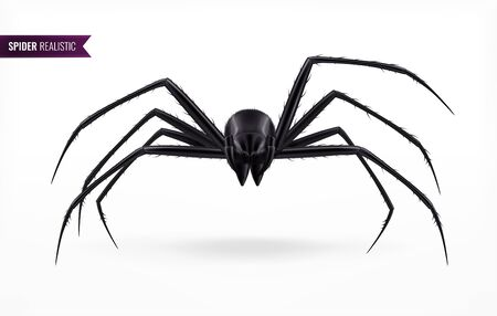 Black spider abstract composition in realistic style on white background with shadow vector illustration Illustration