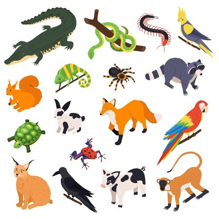 Exotic pets animals birds reptiles isometric set with snake crocodile raccoon monkey parrot fox spider vector illustration