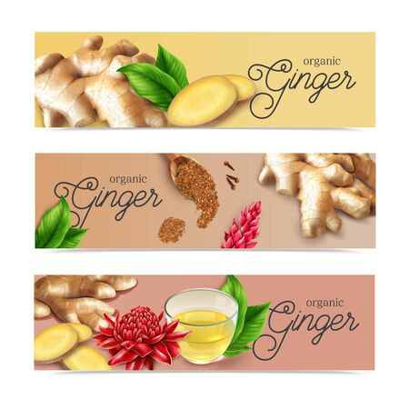 Organic ginger root spice flavor drinks food health benefits 3 realistic horizontal pastel background banners vector illustration