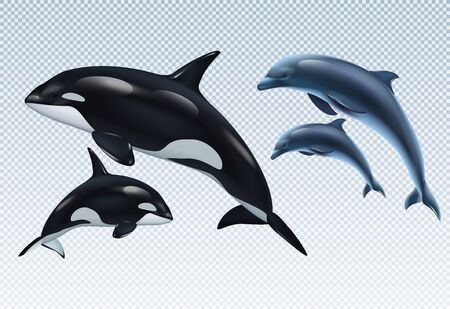 Couples dolphin and killer whale realistic transparent icon set parent and baby vector illustration