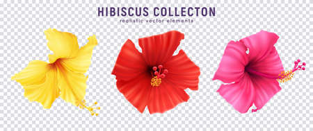 Realistic hibiscus color set with colourful images of blossom flowers isolated on transparent background with text vector illustration 矢量图像