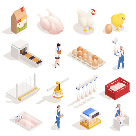 Chicken poultry production farm isometric elements set with hen eggs incubator hatched chicken meat packaging vector illustration