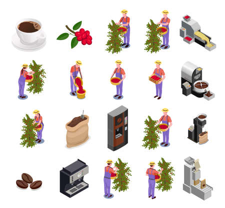 Coffee industry production isometric icons set with plantation fruit harvesting sorting roasting processing packing machine vector illustration  Illustration
