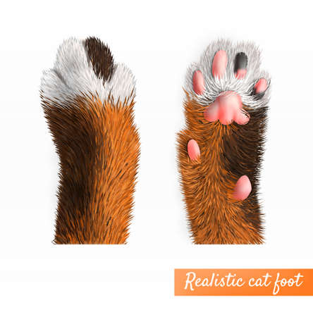 Realistic pretty cat foot top and bottom view set isolated on white background vector illustration Фото со стока - 152609166