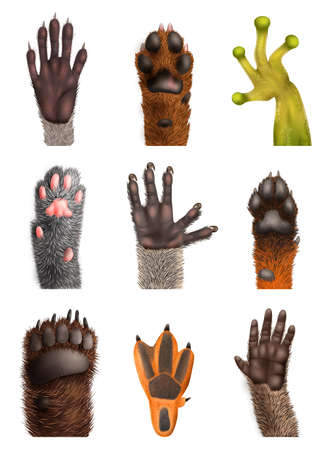 Realistic set of animal bear frog cat monkey penguin racoon koala fox dog paws with claws isolated on white background vector illustration