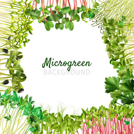Healthy nutrition microgreens frame realistic isolated vector illustration