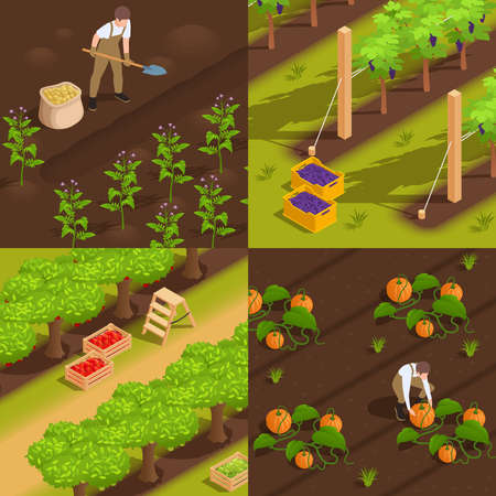 Harvesting concept 4 isometric composition with farm workers digging potato picking grape collecting pumpkins vector illustration Illustration