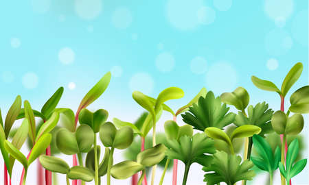 Healthy nutrition microgreens background with vegetarian food realistic vector illustration
